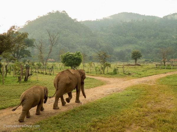 Elephant Nature Park Thailand-33