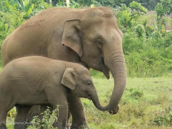 Elephant Nature Park Thailand-36