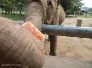 Elephant Nature Park Thailand-5