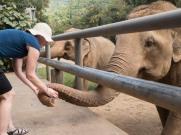Elephant Nature Park Thailand-6