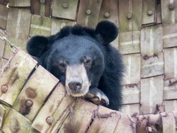 Luang Prabang Free the Bears