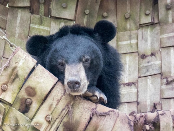Luang Prabang Free the Bears