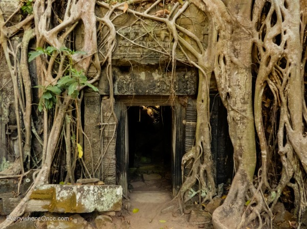Trees overgrowing Ta Prohm Temple in Angkor Wat