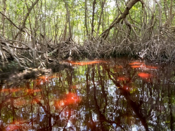 We admit, the mangroves growing out of wine-red water was pretty cool